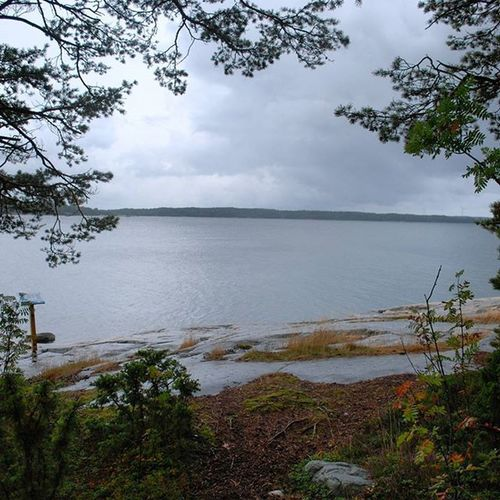 Grey days by the sea 😞 Grey Nature Sea Water Tree Trees Forest Naturepath Blåmusslan Finnish  Finlandssvensk Finland Island Horizon Rock Green Brown