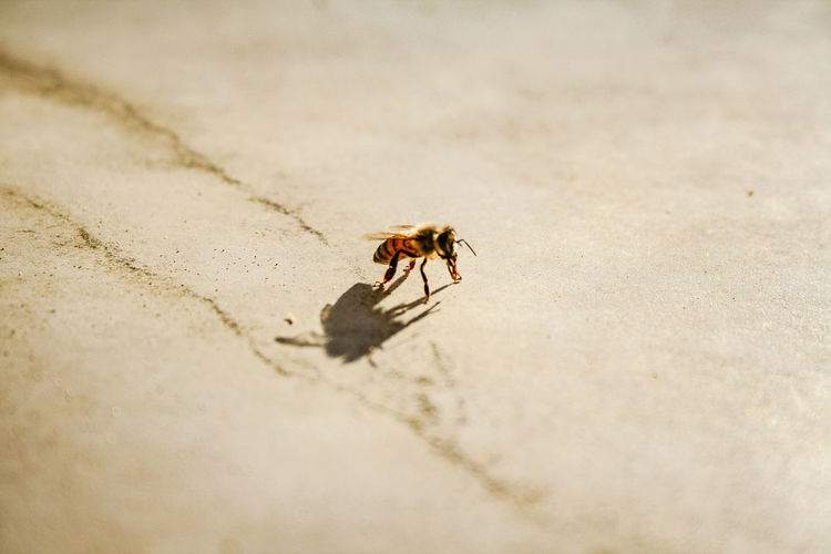 High Angle View Of Honey Bee On Field During Sunny Day