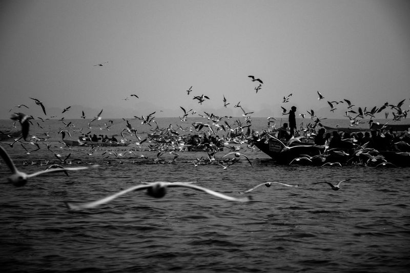 Animals In The Wild Group Of Animals Large Group Of Animals Water Flying Bird Flock Of Birds Outdoors Seagull Boat Fisherman Horizon Over Water Blackandwhite Black And White Black & White