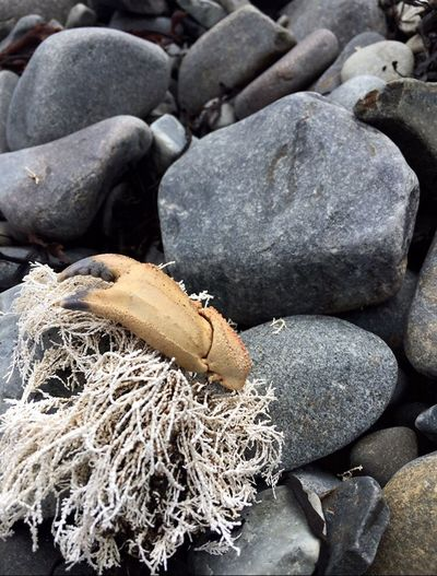 Maine is gorgeous Full Frame No People Fishing Net Nature Buoy Day Beach Close-up Beauty In Nature