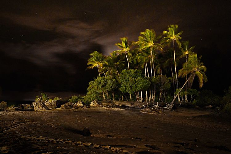 Nature Night Palm Trees In The Wind Brasil Globephotography Mylife Morro De São Paulo