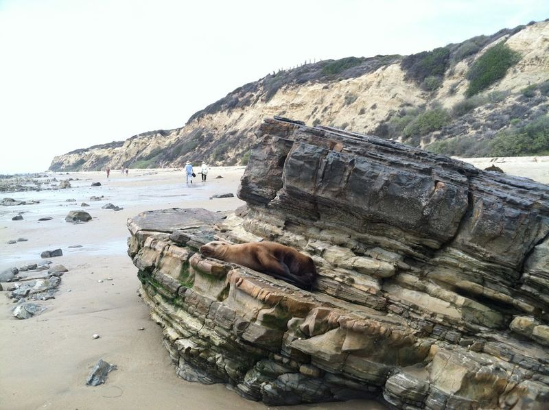 Seal on the rock Ocean Wild Life Animals Sea