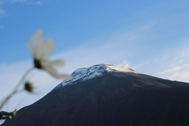Beautiful Baños Beauty In Nature Blue Close Up Close-up Day Delicate Ecuador Flower Mountain Nature No People Outdoors Peak Scenics Selective Focus Sky Snow Volcanic Landscape Volcano White Background