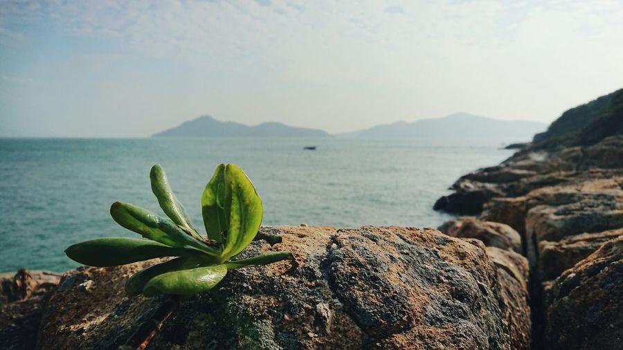 Leaf Rocky