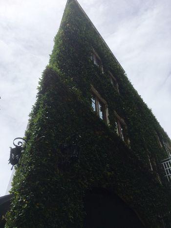 Green Green Wall House Facade Houses And Windows Outdoor Photography Green Color Outdoors