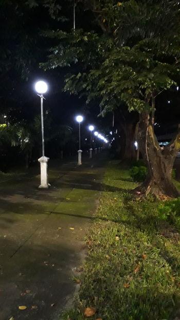 Illuminated Lighting Equipment Street Light Tree Grass No People Tree Trunk Spotlight Night Eyeemphotography