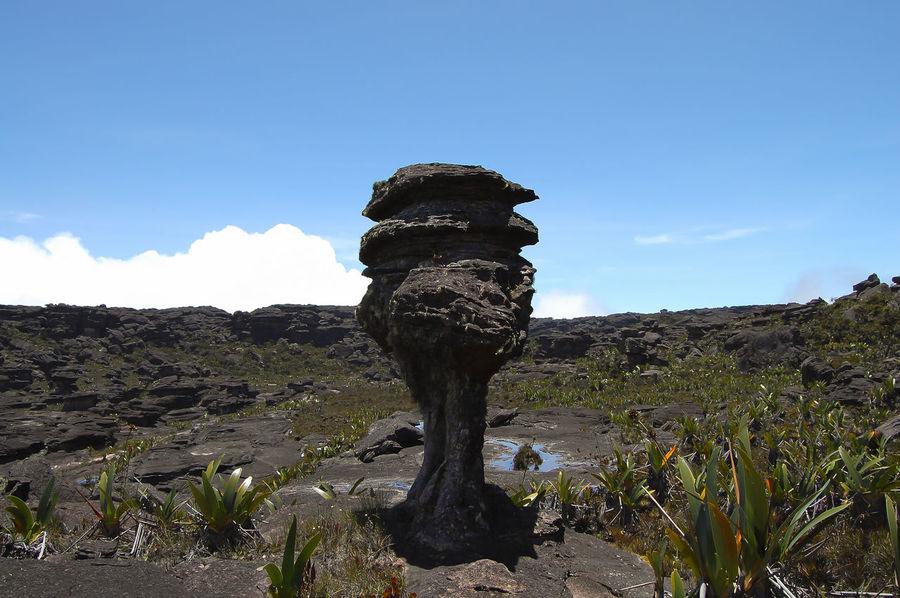 Mount Roraima - Venezuela Canaima Table Mountain Venezuela Cliff Landscape Nature Roraima Tepuy