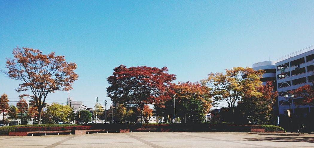泉区役所前も色付いてきました。Relaxing Taking Photos Enjoying Life