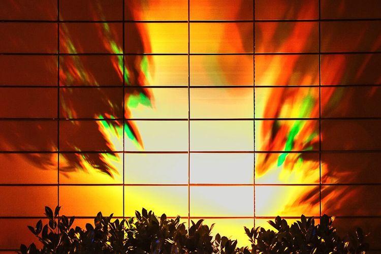 Appearance Lemon By Motorola Square Light And Shadow Light Nightlife EyeEm Best Shots Abstract Dramatic Leaves Fujifilm X-E2