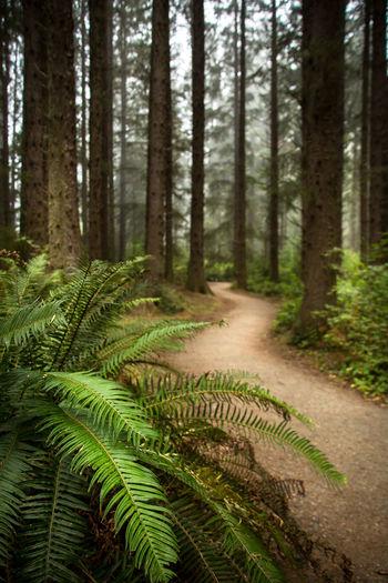 Path through misty coastal forest