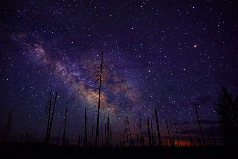 Low Angle View Of Silhouette Bare Trees Against Star Field At Night