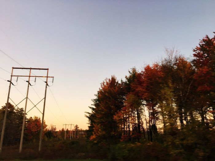 Tree Clear Sky Sunset Nature Autumn No People Low Angle View Sky Beauty In Nature Tranquility Day Outdoors GrowthhForestt Benton Maine