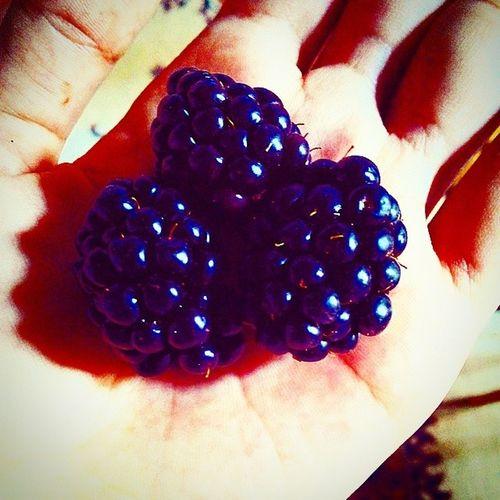 Böğürtlenlerim :) Emindenancabukadarkaçirdim Delicious ımm Bahce berry