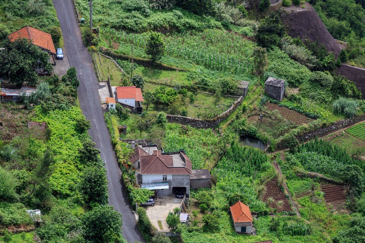 High angle view of trees and houses in village