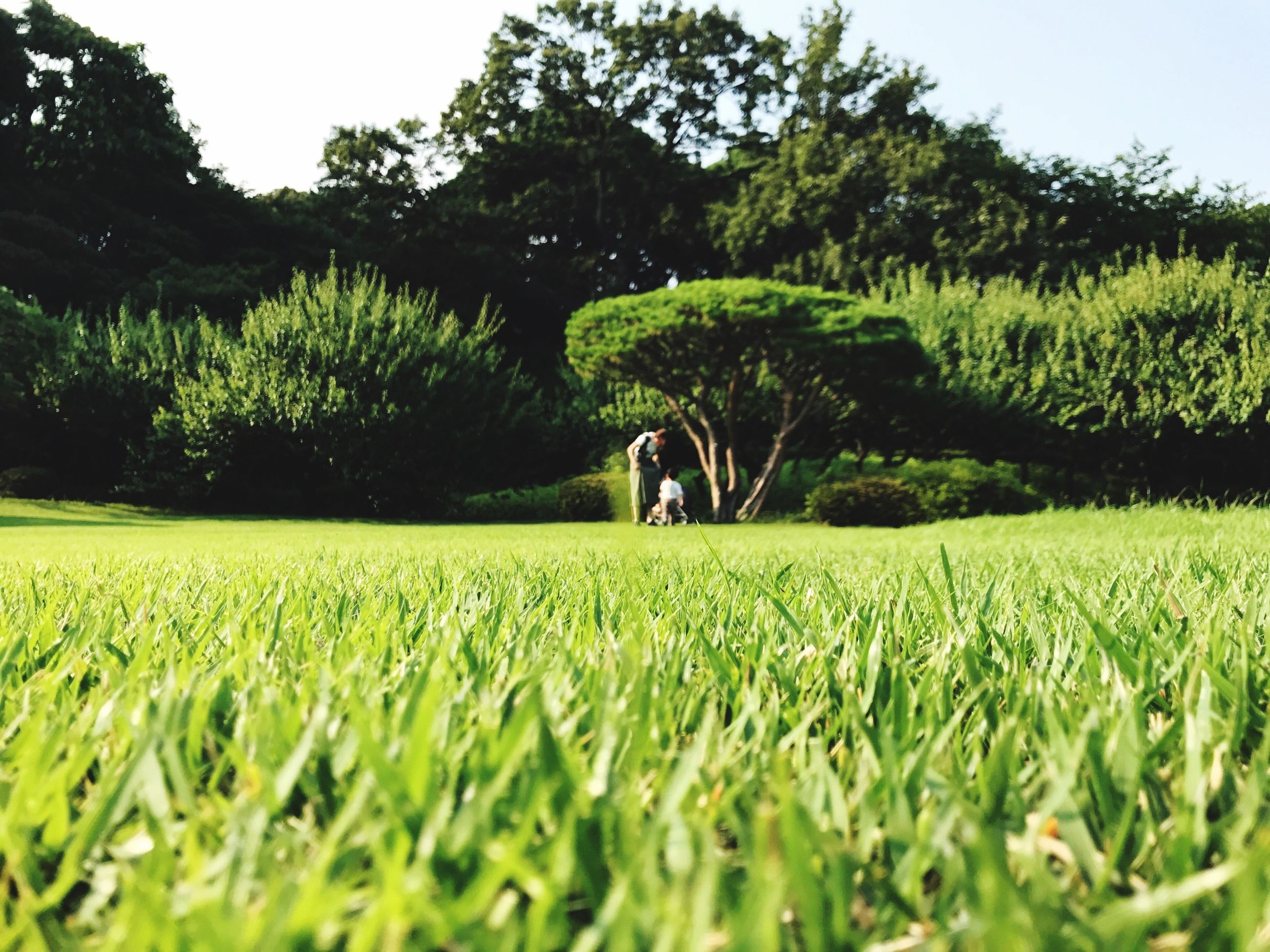 grass, growth, tree, field, green color, nature, day, walking, outdoors, full length, real people, men, beauty in nature, sky, golf course, people