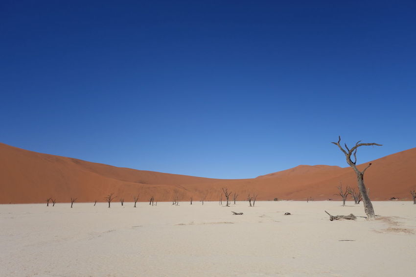 Nothing but sand, and clear, blue sky... Africa Arid Climate Beauty In Nature Blue Clear Sky Colorful Colors Contrast Copy Space Hot Landscape Mountain Mountain Range National Park Nature No People Non-urban Scene Outdoors Remote Scenics Solitude Tranquil Scene Tranquility Travel Travelling
