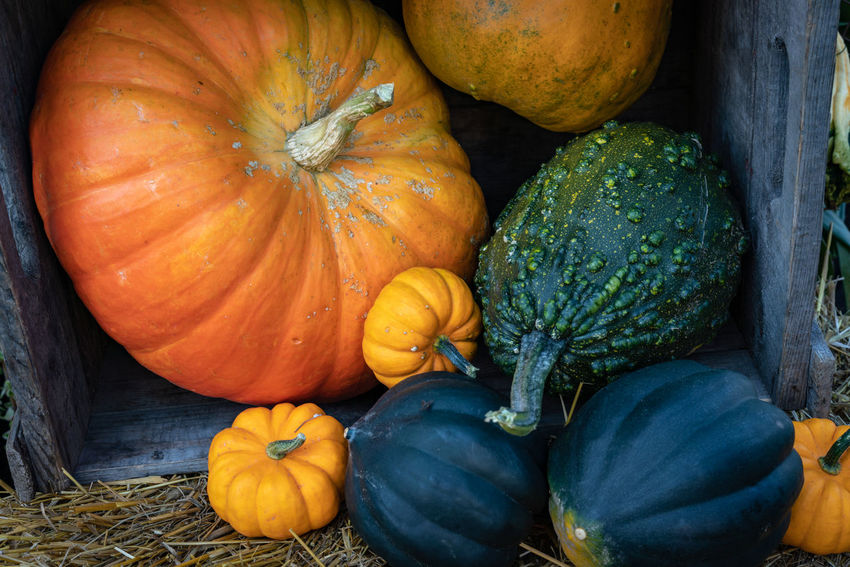 The EyeEm Collection Colors Autumn Choice Close-up Day Food Food And Drink Freshness Halloween Harvest Healthy Healthy Eating Healthy Lifestyle High Angle View Nature No People Orange Color Organic Outdoors Plant Pumpkin Squash - Vegetable Still Life Vegetable Wellbeing