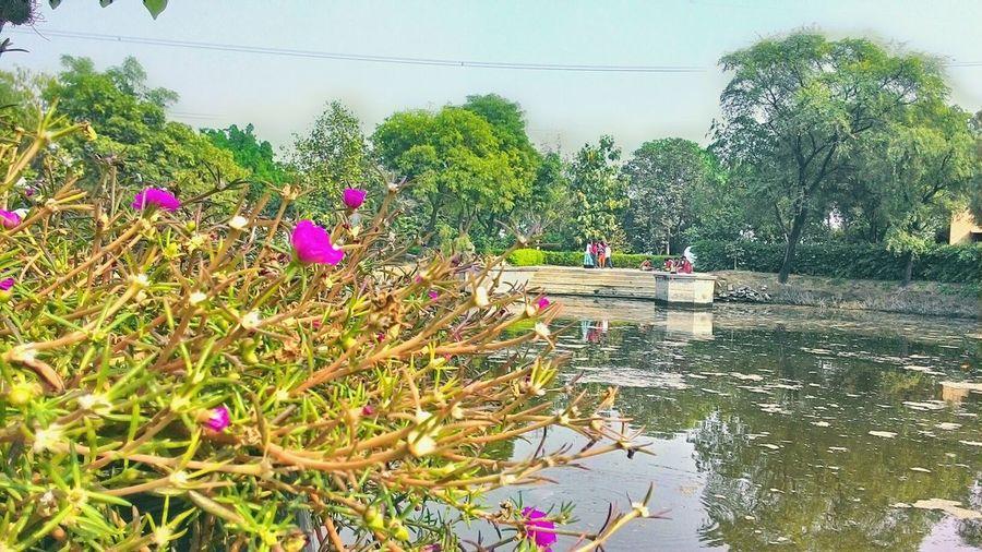 Vrindakund Lake Vrindavan Diaries U.P Gokuldhaam Tulsi Maharani🙏