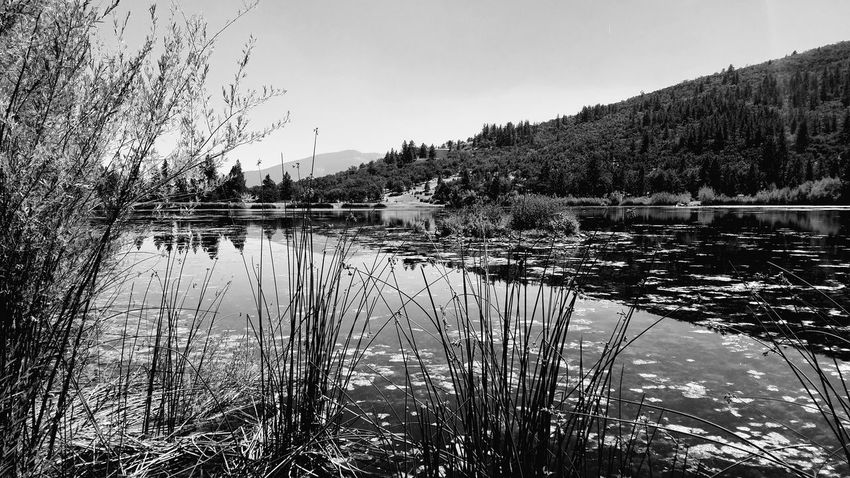 Simplicity and Silence Water Nature Lake Reflection Outdoors Sky No People Beauty In Nature Scenics Day Tree Meditation Copy Space Symmetry Tall Grasses Contemplating Black And White Silence Dream Journey Stillness Living Contemplation Rewilding Reflection