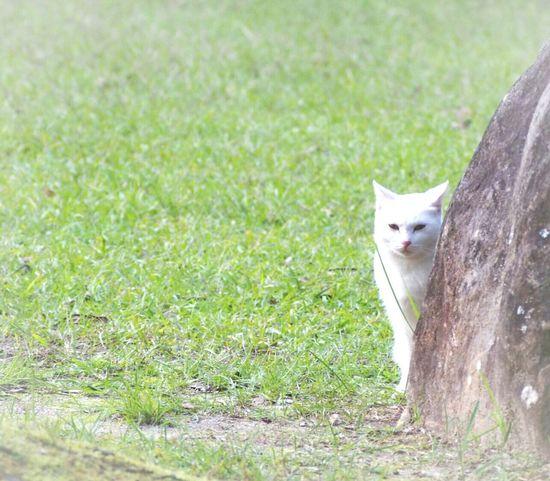 すごく視線を感じる…💦 猫ぽとれ ノラ猫 にゃんこ Cat ℃-ute Taking Photo さんぽ One Animal Nature EyeEm Best Shots