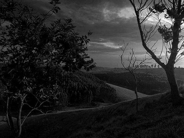 Jacareí - Brasil Blackandwhite Photography Black Background Paisaje Paisagem Florest