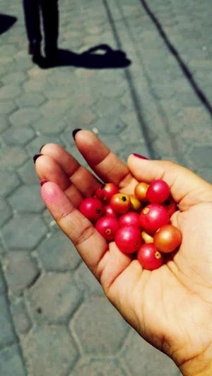 Kersen Talok Mutingia Calabura Fresh Fruits