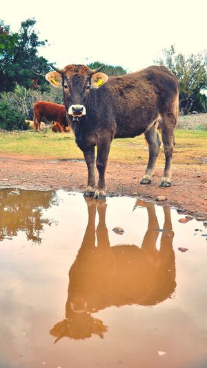 View of horse drinking water