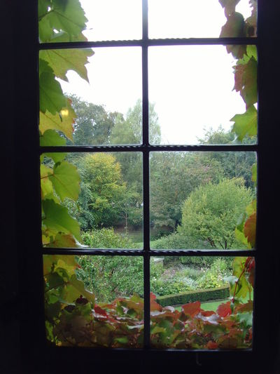 Backgrounds Beauty In Nature Close-up Day Full Frame Geometric Shape Green Green Color Growth Ivy Lush Foliage Mount Grace Priory Nature No People Plant Scenics Sky Tranquility Tree Window