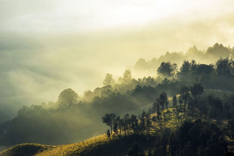 Tranquility Atmospheric Mood Beauty In Nature Cloud - Sky Day Fog Forest Landscape Mountain Nature Nature Reserve No People Outdoors Pinaceae Pine Woodland Sky Sunset Tranquility Tree Tree Area Welcome To Black Winter