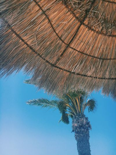 summer Sea Palm