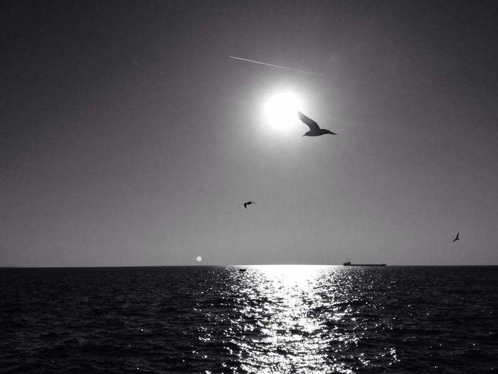 Blackandwhite Sea And Sky Sea And Bird Postcardsfromtheworld Original Experiences On The Way