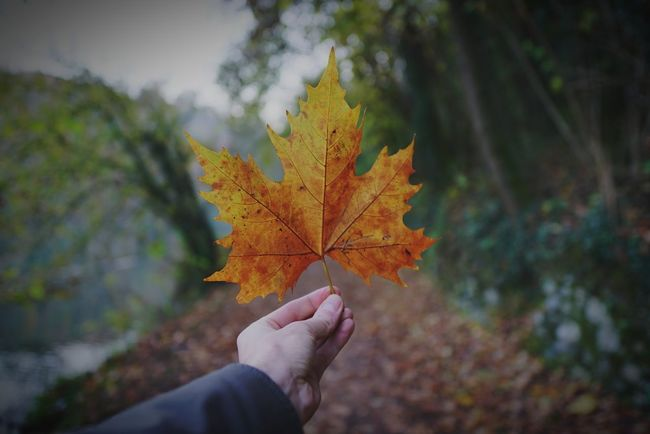 EyeEm Selects Autumn Leaf Change Human Body Part Human Hand Maple Leaf Nature Personal Perspective Forest Outdoors Holding Day Scenics Beauty In Nature Travel Destinations Close-up Perspectives On Nature Autumn Plant Part Sal24f20z Lombardia, Italy Luca Riva Sony A7r2 Lucariva