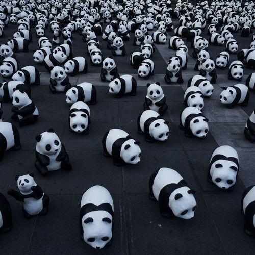 Panda Festival Black White Sclupture Dolls Taking Photos Traveling Travel Photography Pattern Cute The Week Of Eyeem Showcase March