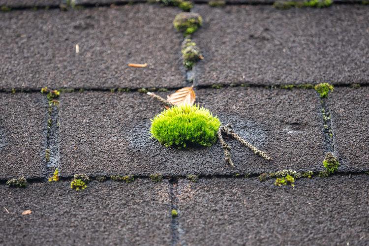 Moss grows wild