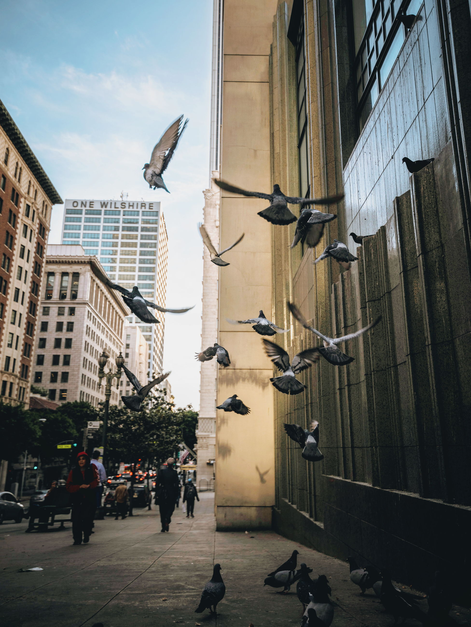 architecture, built structure, building exterior, city, skyscraper, bird, flying, outdoors, day, sky, no people