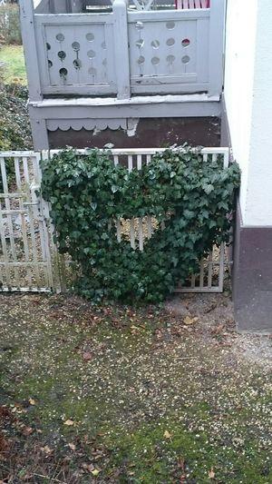 Herz ❤ Heart Liebe ❤ Love Love ♥ Liebe
