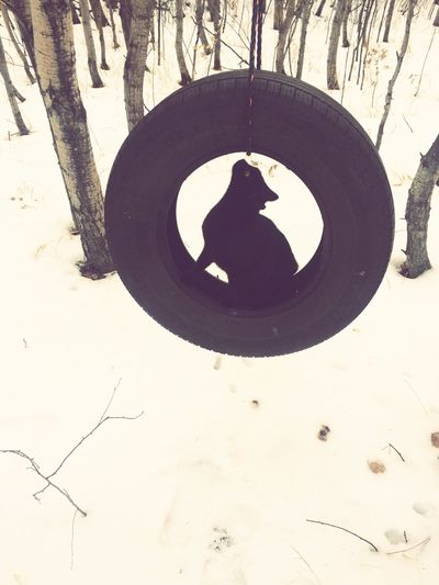 Skye found the tire swing Day Circle No People Outdoors Nature