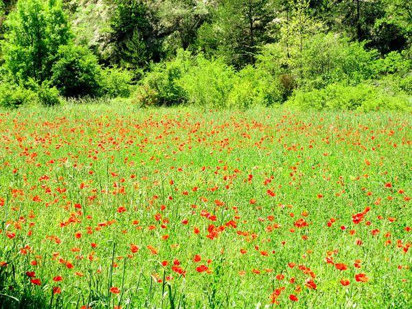 Flowers The Week The Week On Eye Em Green Color Field Nature Growth Grass Beauty In Nature Flower Outdoors Red No People The Week On EyeEem The Week Of Eyeem