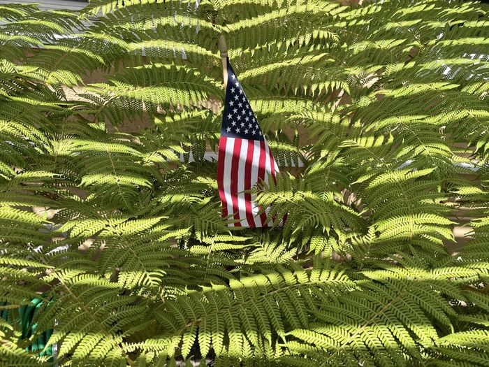 Close-up of flag against plants