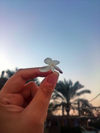 Flowers Hand Hand Holding Flower Jasmine Flower Landscape Palm Trees Sky Trees Trees And Nature Trees And Sky First Eyeem Photo