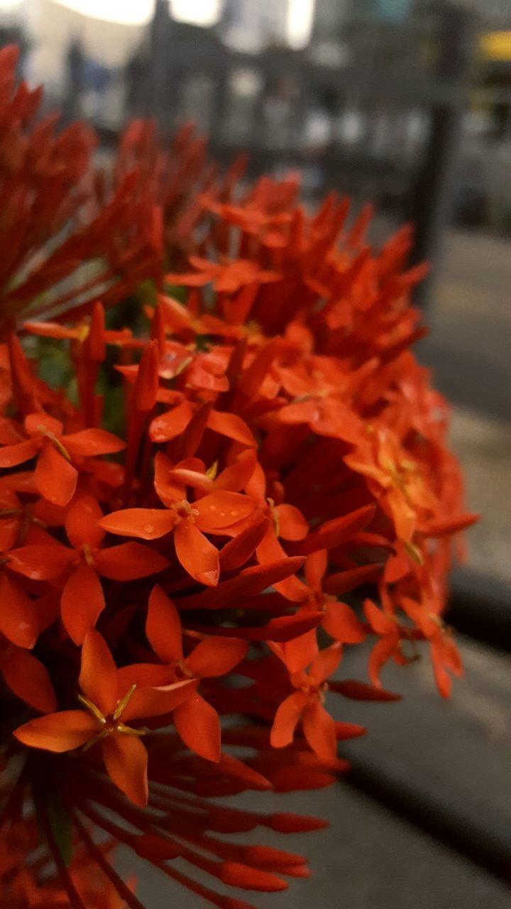 flower, petal, growth, beauty in nature, freshness, fragility, focus on foreground, flower head, ixora, nature, plant, close-up, red, day, outdoors, no people, blooming