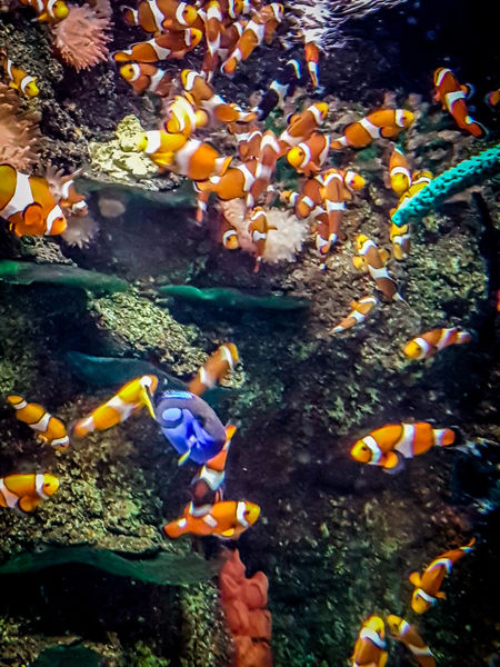 Beautiful Colors Nature Nature Photography Sea Life Aquarium Animal Themes Aquarium Aquarium Life Beauty In Nature Colorful Coralreef Day Fish Nature Nature_collection Sea Life Underwater underwater photography