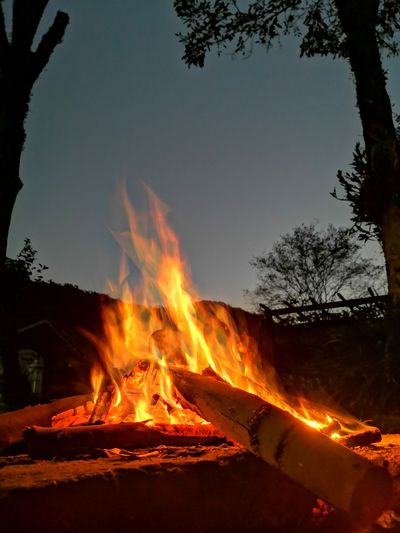 Tree Heat -