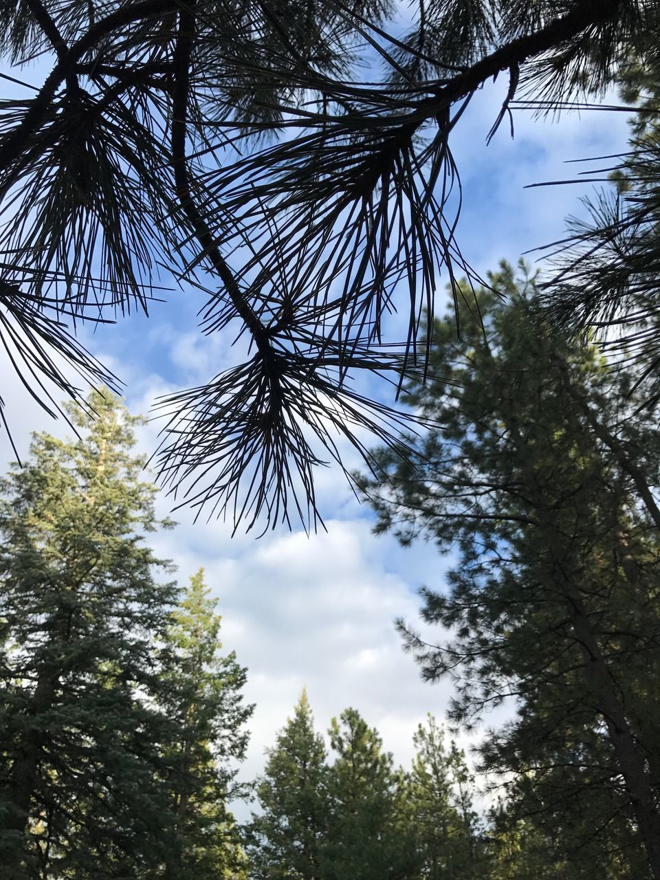 tree, low angle view, sky, growth, nature, day, no people, outdoors, beauty in nature, branch, cloud - sky, forest