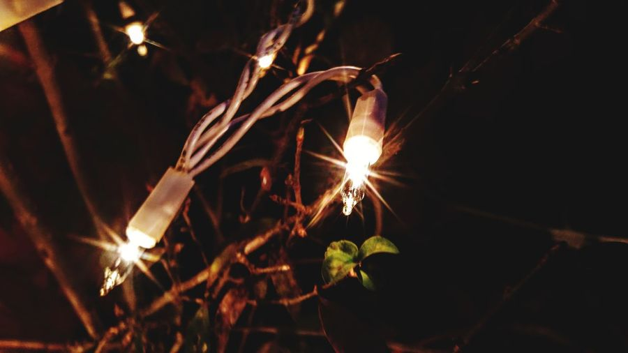 EyeEm Selects No People Night Plant Outdoors Illuminated Tree Sky Close-up