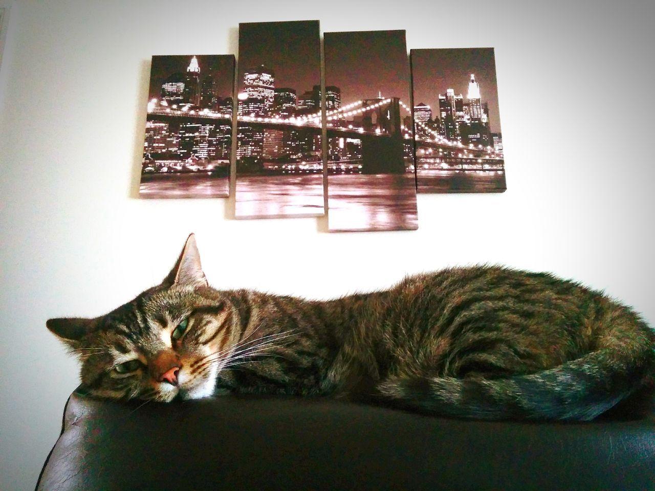 domestic cat, domestic animals, animal themes, pets, feline, one animal, mammal, cat, indoors, relaxation, sitting, no people, home interior, illuminated, night