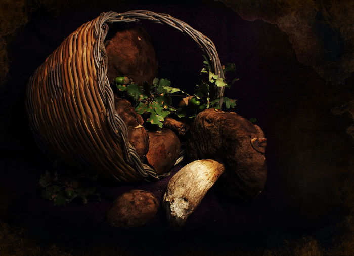 Basket full of mushrooms Beauty In Nature Black Background Dark Food Foodphotography Growth Lifestyles Light Mushroom_pictures Mushrooms Natural Pattern Nature No People Photography In Motion Tranquility