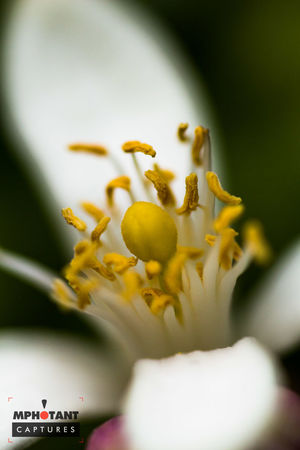 Close-up Day Flower Fragility Macro_collection Nature Outdoors Portrait Selective Focus White Color