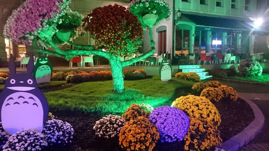 Architecture Building Exterior Built Structure Close-up Flower Illuminated Multi Colored Night No People Outdoors