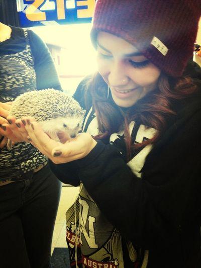 Cutest Little Baby Hedgehog